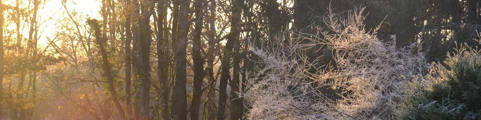 Forêt en Sologne